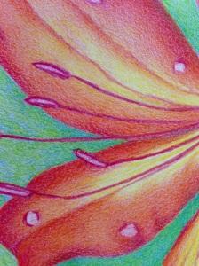 Gwen's Lilies