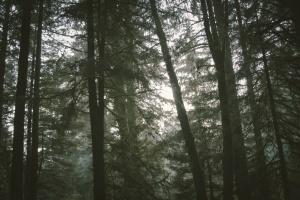 Trees1be620c3