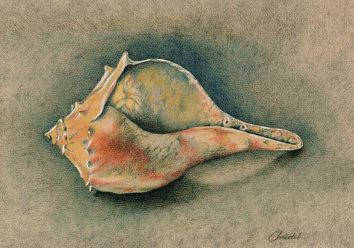 A Shell