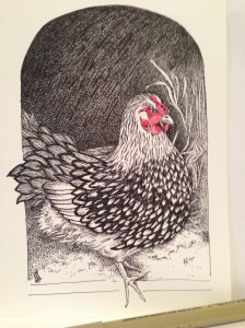 hen-drawing