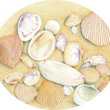 Shell circle 2LR
